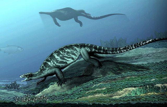 """A vélhetően sekély vízi életmódot folytató, korántsem mindennapi """"teknős""""."""
