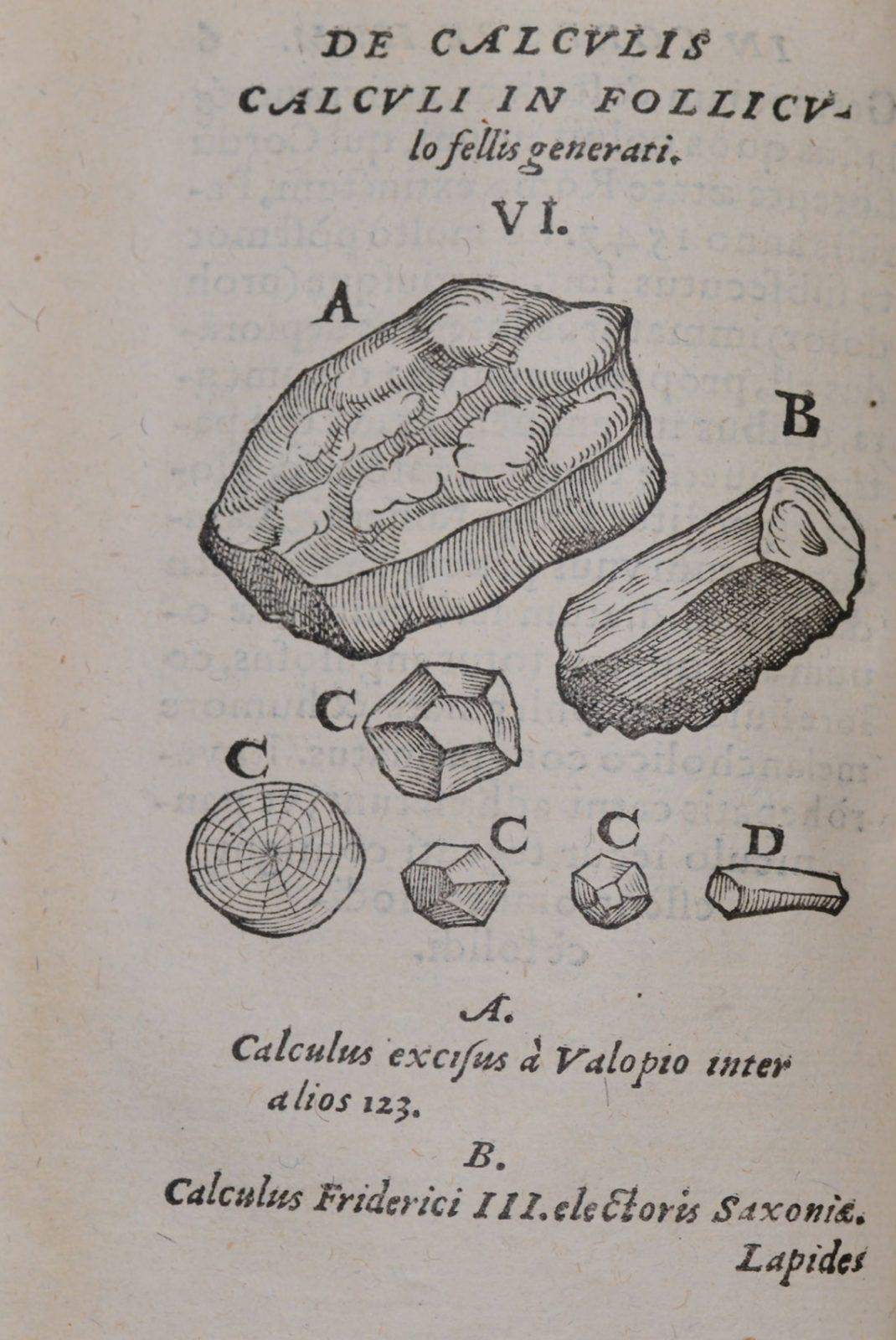 randevú fosszilis kagyló