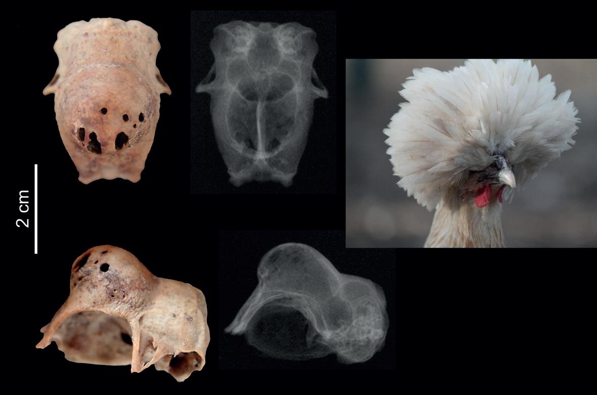Randevú a legkorábbi emberi csontok