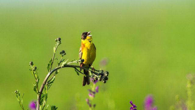 https://termvil.hu/wp-content/uploads/2021/03/ornitologia0-640x360.jpg